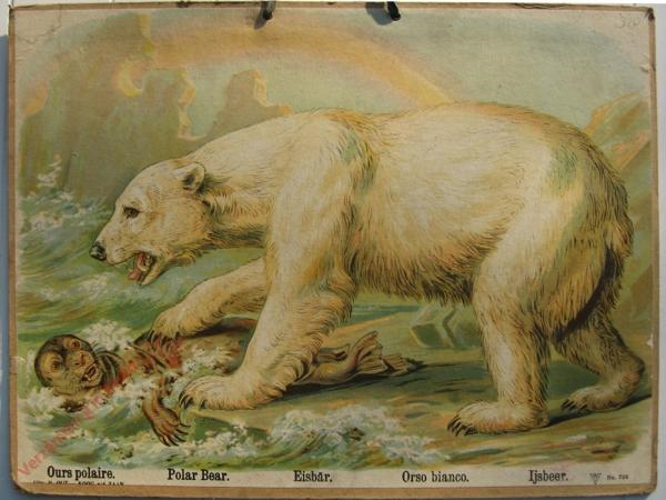 756 - Ours polaire, Polar Bear, Eisbar, Orso bianco, Ijsbeer